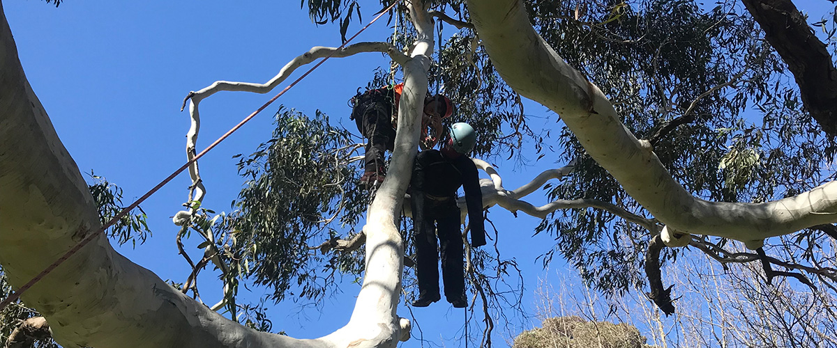 Gain arborist qualifications in chainsaw, tree felling, tree pruning and all aspects of tree work